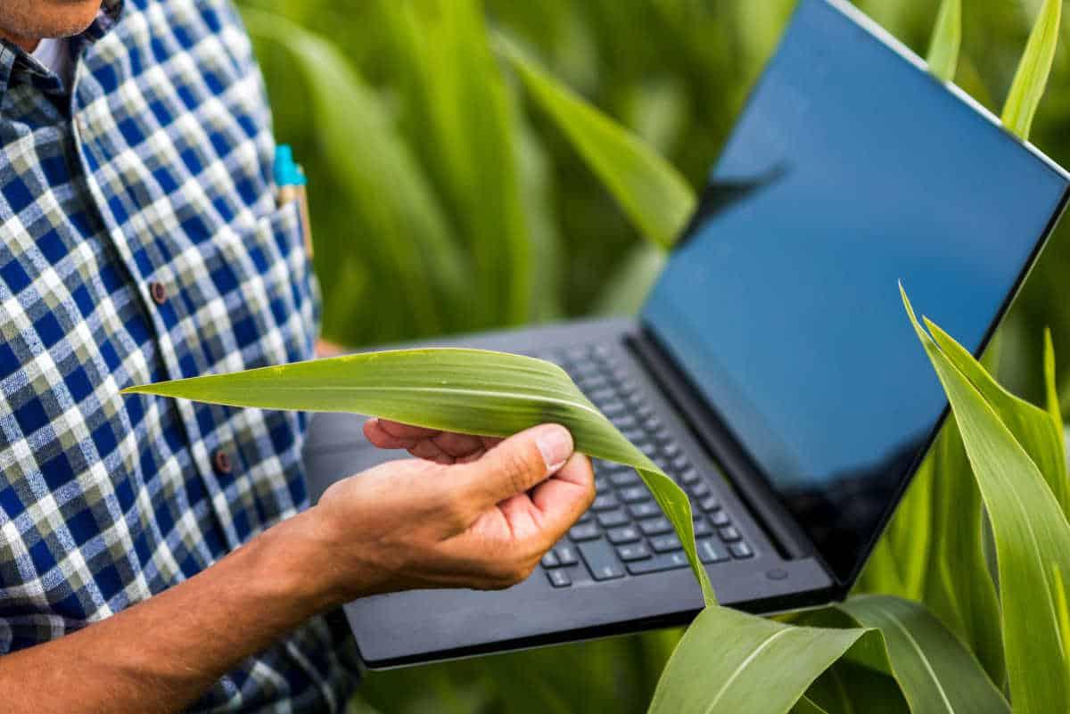 Vuoi aprire la partita iva come Agrotecnico e Agrotecnico laureato?